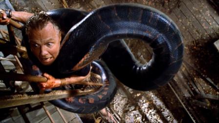 捕蛇人用活人做诱饵 引来十几米长巨蟒 没想到自己却被蟒蛇吞了!