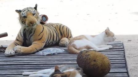 外国男子自制音箱老虎,恶搞悠闲猫咪,果然猫最大的敌人就是狗!