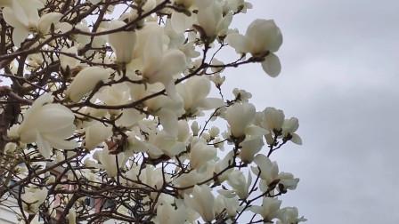 忙碌的你,离春天有多远?就在今天,余月陪你一起去欣赏鸟语花香