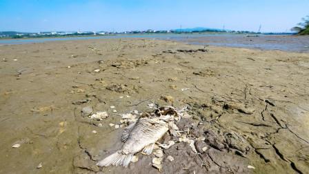 台湾遭遇严重危机,普通农民成为最大受害者,美媒报道一针见血