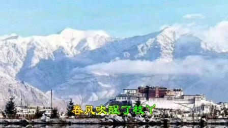去西藏感受四季