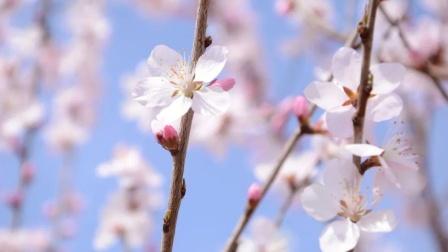 春季是呼吸道疾病的高发季,劝告:日常做好这4点,才能少生病
