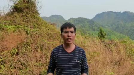 风水大师张少波贵州丹寨学员,刘世昌点评墓地风水视频,此地有两处凹风