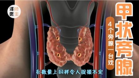 甲状旁腺:小病灶,大危害,而且常常较为隐蔽