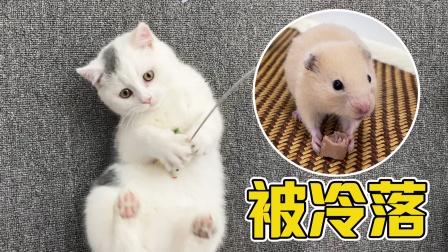 主人有了新宠物猫咪冷落了小仓鼠,伤心