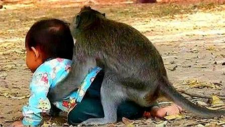 猴子把小女孩当自己孩子,接下来太意外了,镜头记录全过程
