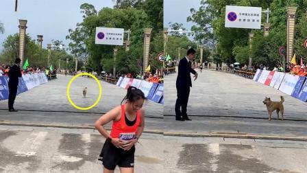 狗狗误入马拉松赛道 紧跟运动员通过终点 主持人上前采访笑翻全场