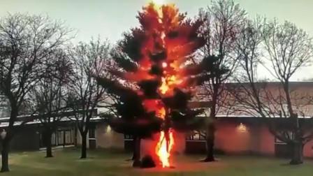 恐怖! 实拍大树被闪电击中瞬间:几秒内着火解体迅速倒地