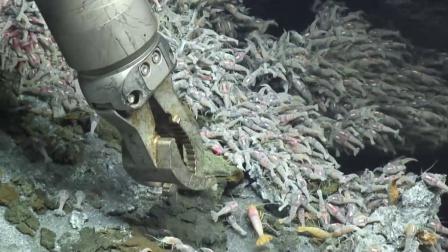 生活在450°的火山口的虾,要如何煮熟?