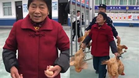 男子凌晨偷18只鸡秒被抓  母鸡派出所下蛋大妈收获意外惊喜