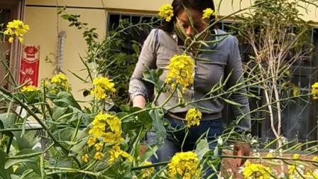 在开满鲜花的小院里拔竹笋