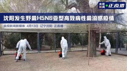 沈阳发生野禽H5N6亚型高致病性禽流感疫情