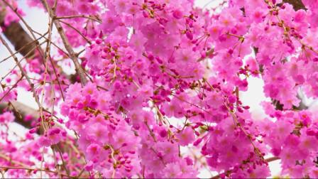 最美的春天