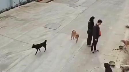男子被狗子当面挑衅,感觉好无奈