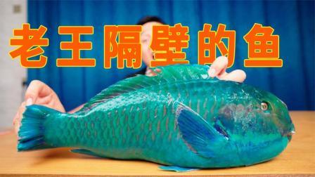 又一种一夫多妻的鱼,晚上会用唾液包裹自己入睡,吃起来如何?