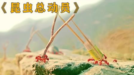 红蚁的武器太先进,一根根锋利的牙签就让敌人战栗,大战一触即发!