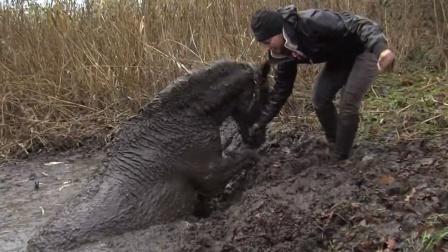 一匹马不慎陷入沼泽,正愁如何营救时,女主人的做法让人感动