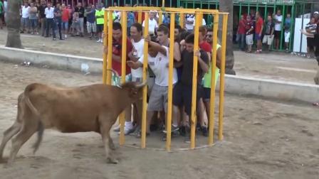 一群小伙隔着铁笼挑衅公牛,本以为自己很安全,下一秒却发生意外