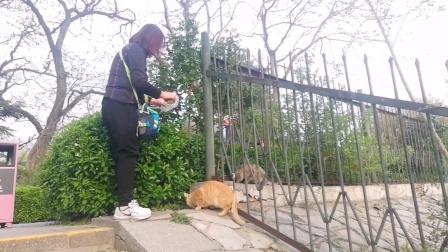 2021玉渊潭公园樱花节流浪猫
