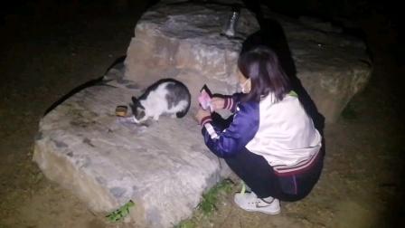 2021玉渊潭公园流浪猫小鲁宾