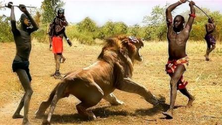 """狮子怎么会怕""""马赛人""""?三秒钟后眼见为实,镜头拍下全过程"""