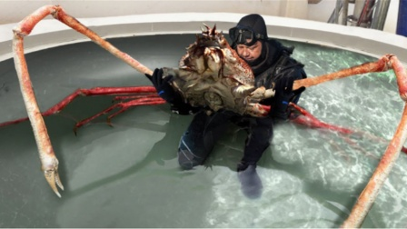 """有一种螃蟹,人们只敢吃蟹钳,原来吃一整只会被""""判刑""""!"""