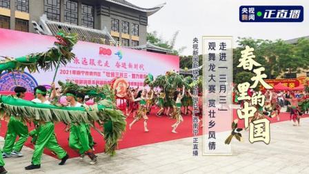"""春天里的中国丨走进""""三月三""""观舞龙大赛 赏壮乡风情"""