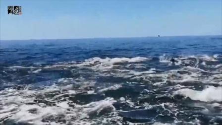 一家人观光时目睹大量沙丁鱼跃出海面 下一秒把人吓得尖叫