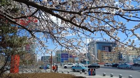 花红柳绿 穿着棉衣拍摄春天的画面