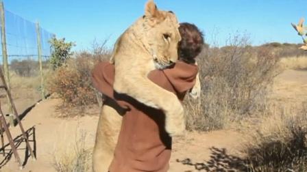 """饲养员十年后归来,迎面冲出一头狮子,直接一个""""恶狗扑食""""!"""