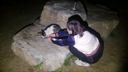 2021玉渊潭公园流浪猫