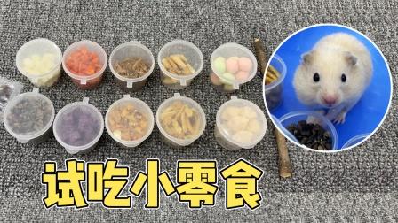 主人给小仓鼠准备10种不同的零食试吃