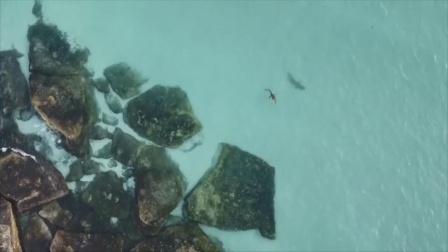 男子用无人机拍到鲨鱼尾随鳄鱼 结局让他感到遗憾
