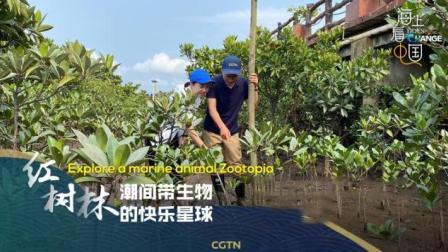 """海上看中国:红树林——潮间带生物的""""快乐星球"""""""