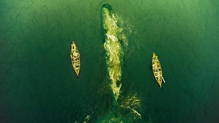 对于复仇的鲸鱼来说,它要的只是人类放下手中的捕鲸叉