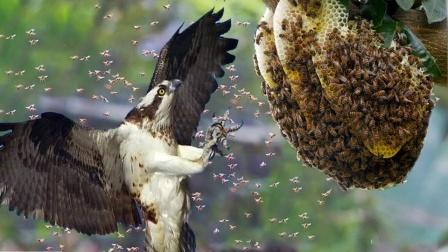 """它""""单挑""""整个蜂巢,马蜂被吃到没脾气!"""