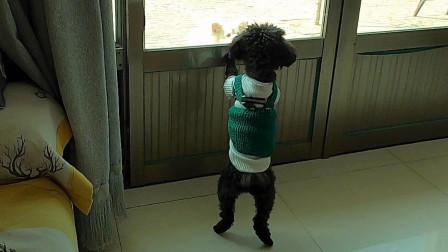 原来黑糖也是只喜欢隔着门吵架的狗狗