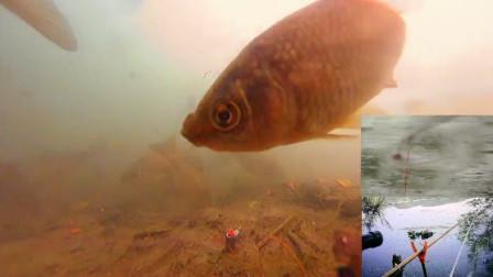 这个季节鲫鱼该怎么钓?水下高清可视实拍告诉你,真是钓无定律啊
