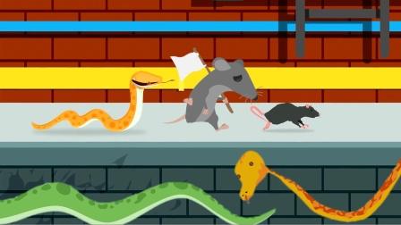 蛇和老鼠为何都想离开下水道?科普英语学习