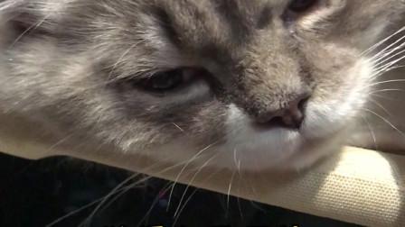 """做一只""""舔猫"""",真的会很开心吗?"""