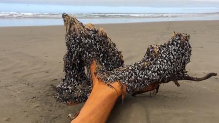 """海滩惊现""""幽灵树"""",看得直叫人头皮发麻!"""