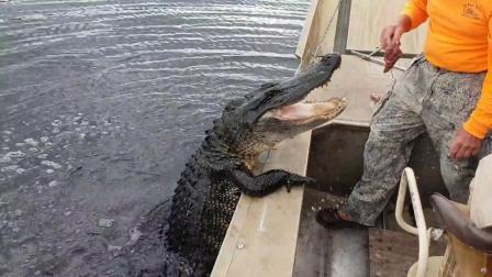 """水中""""黑影""""靠近渔船,看清后吓出一身冷汗"""