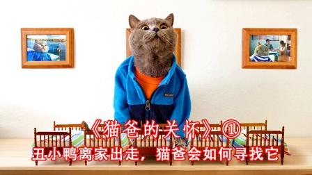 丑小鸭离家出走后,猫爸会如何寻回它,治愈短片《猫爸的关怀》