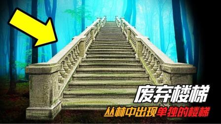 树林中凭空出现楼梯,为什么靠近它的人,就会发生诡异的事情?