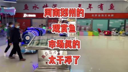 河南郑州观赏鱼市场,当地的朋友带路探索一番,进去里面整洁干净