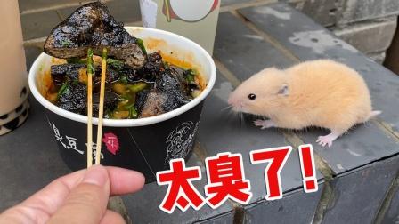 和仓鼠出去玩,买臭豆腐吃,小仓鼠:太臭了