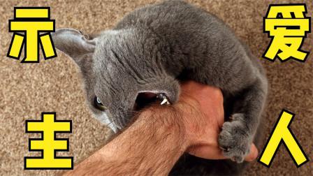 7种动物行为表达的意思,猫主子咬你其实是看得起你的意思?