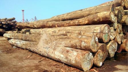 Top5世界上最硬的木头,第一位连钉子都难打进去!