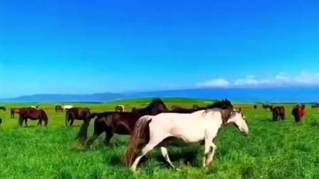 五一旅游就去大美草原
