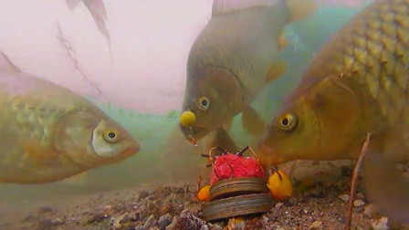 百年没干的水库,用水下镜头一看瞬间不淡定了,一条接一条的大鱼